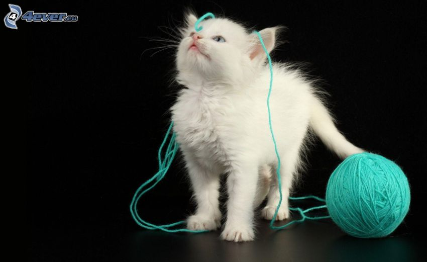 petit chaton blanc, pelote, laine