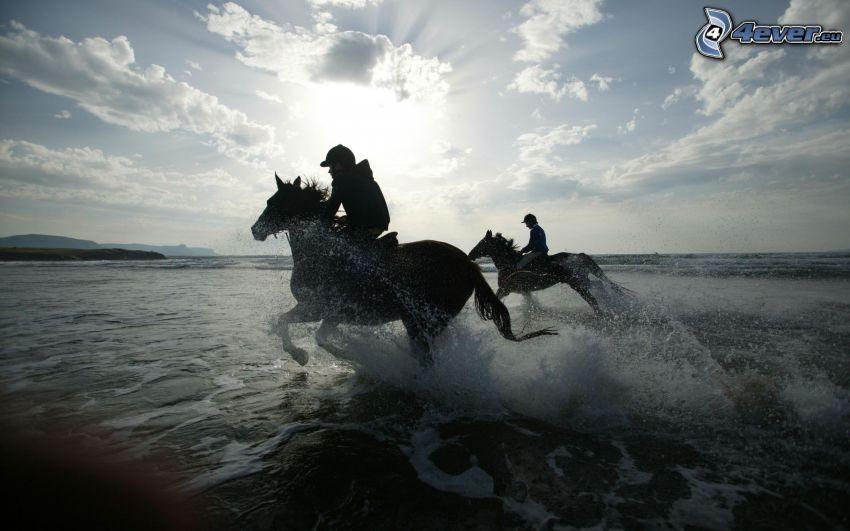 cavaliers, eau, silhouettes