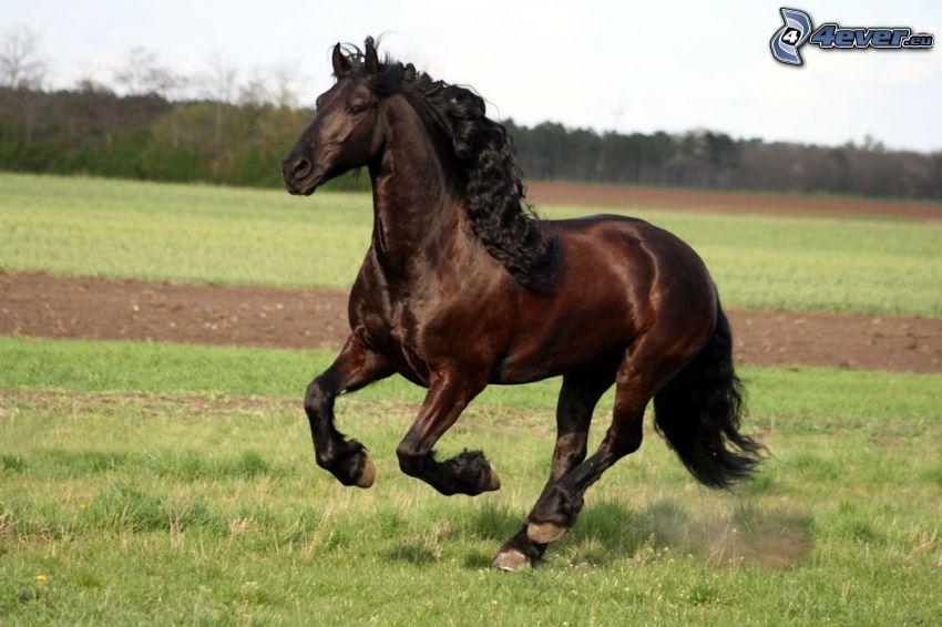 cheval brun, champ, crinière