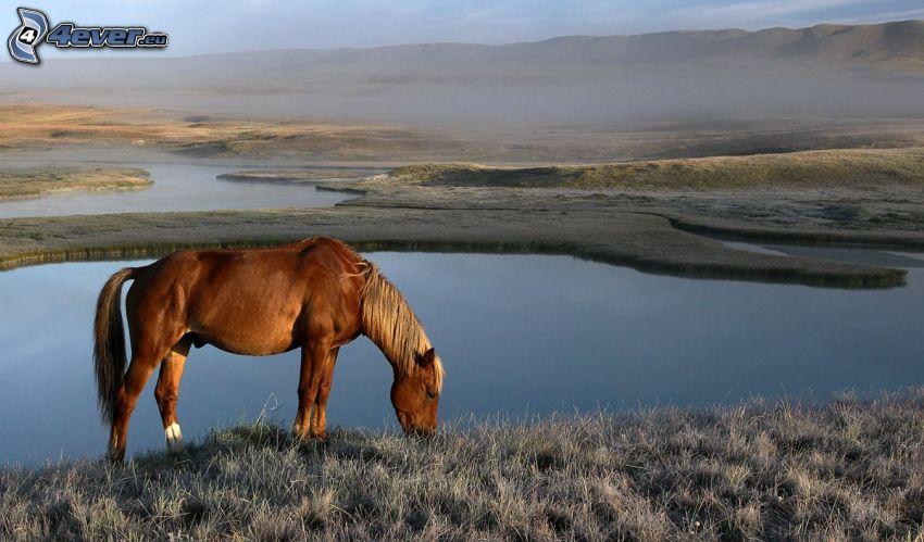 cheval brun, des lacs, brouillard au sol