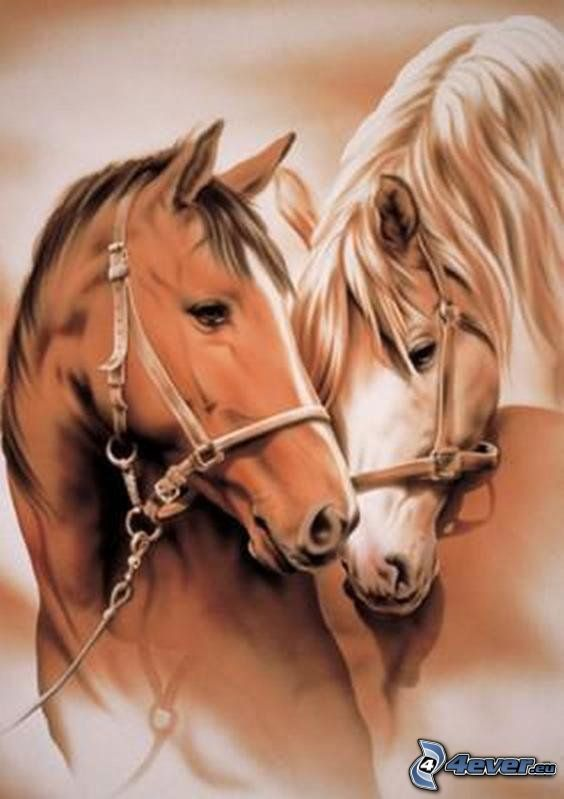 chevaux, amour
