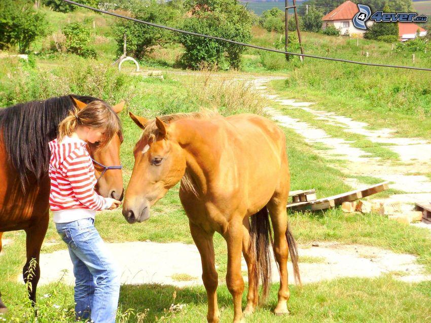 chevaux, nourriture, fille, ferme