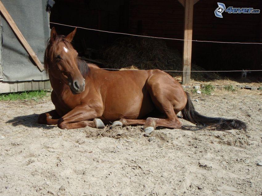le cheval dans la clôture, sable, jument, étable