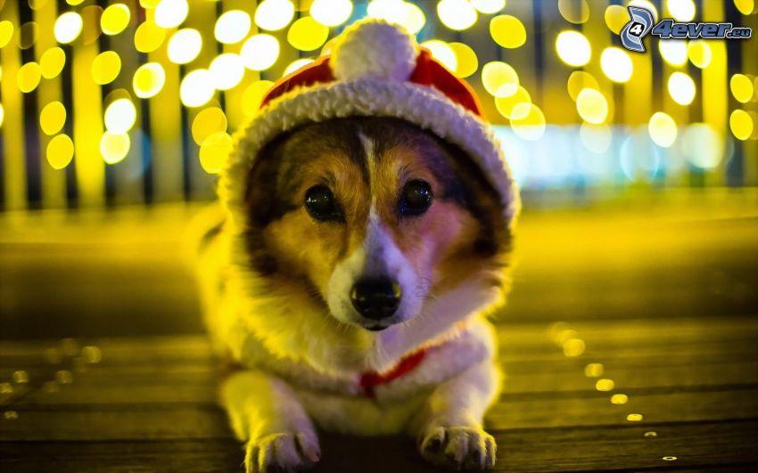 chien, chapeau de Noel