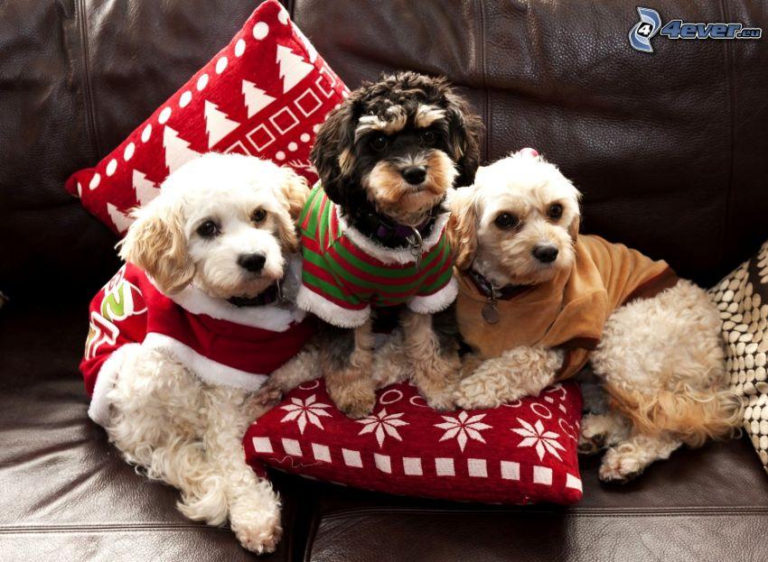 chiens, costume de Père Noël