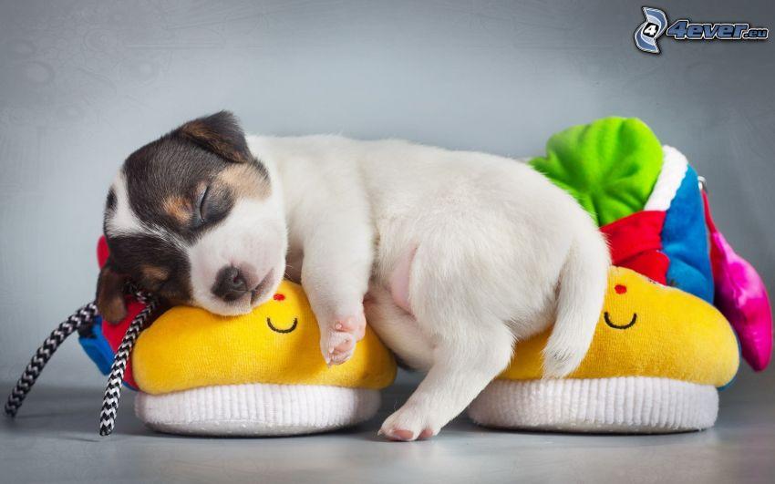 chiot dormant, pantoufles