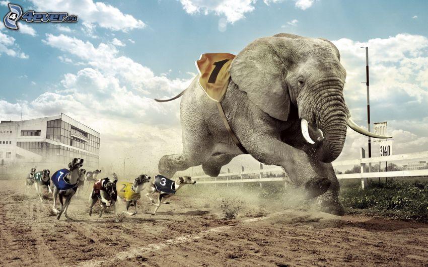 course, éléphant, chiens
