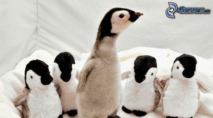 enfant de pingouin, animaux en peluche