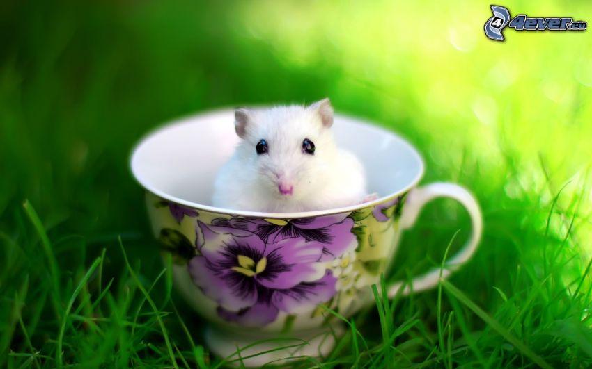 hamster, tasse