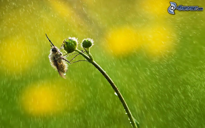 abeille, plante, gouttes