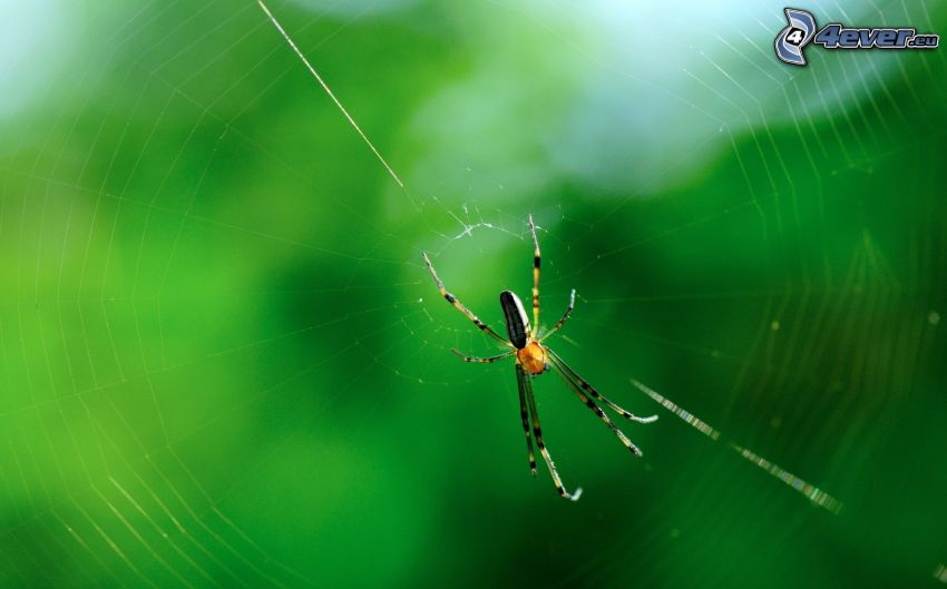 araignée sur une toile d'araignée