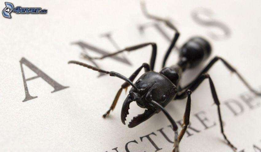 fourmi, papier, lettres, macro