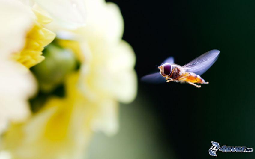 mouche, fleur