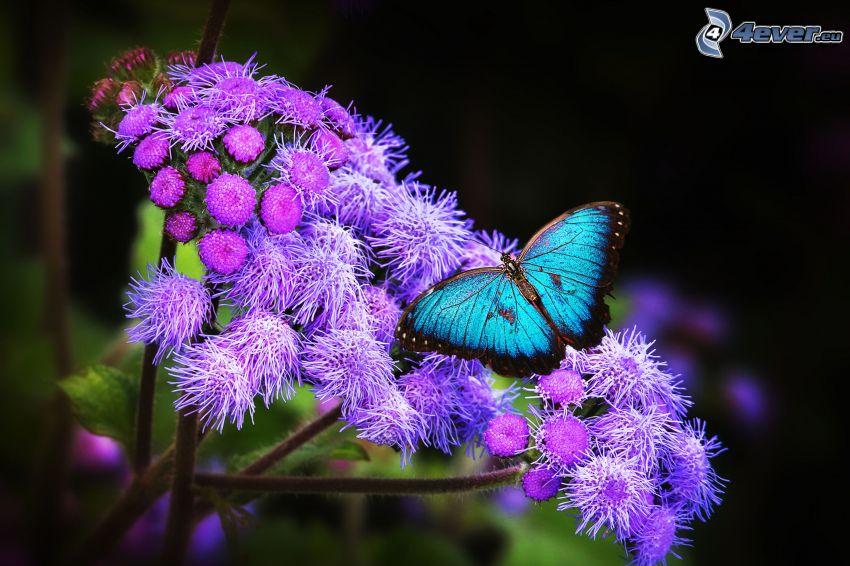 papillon bleu, fleur violette