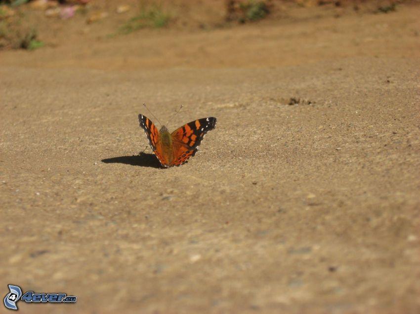 papillon Paon