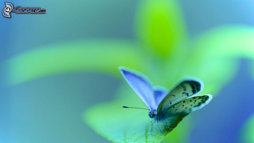 papillon sur feuilles