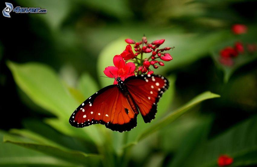 papillon sur fleur, fleur rouge
