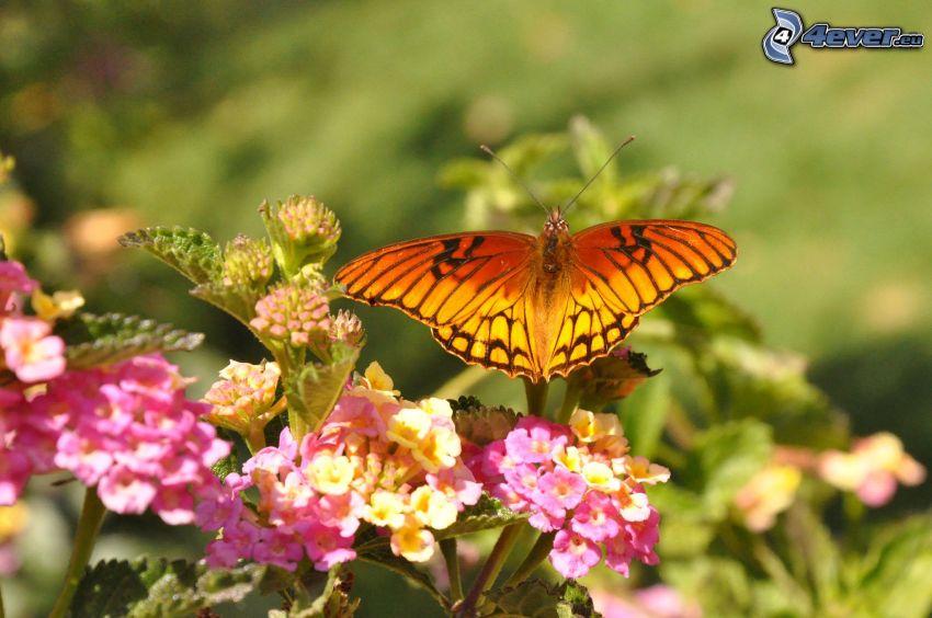 papillon sur fleur, fleurs roses