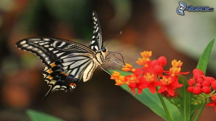 papillon sur fleur, fleurs rouges