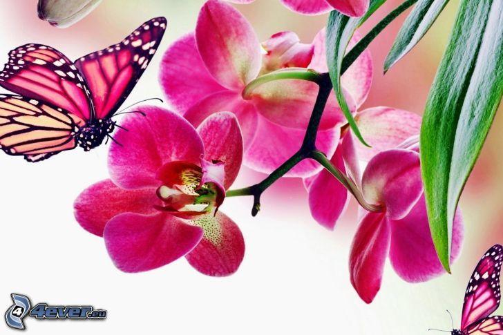 papillon sur fleur, Orchidée, fleur rose