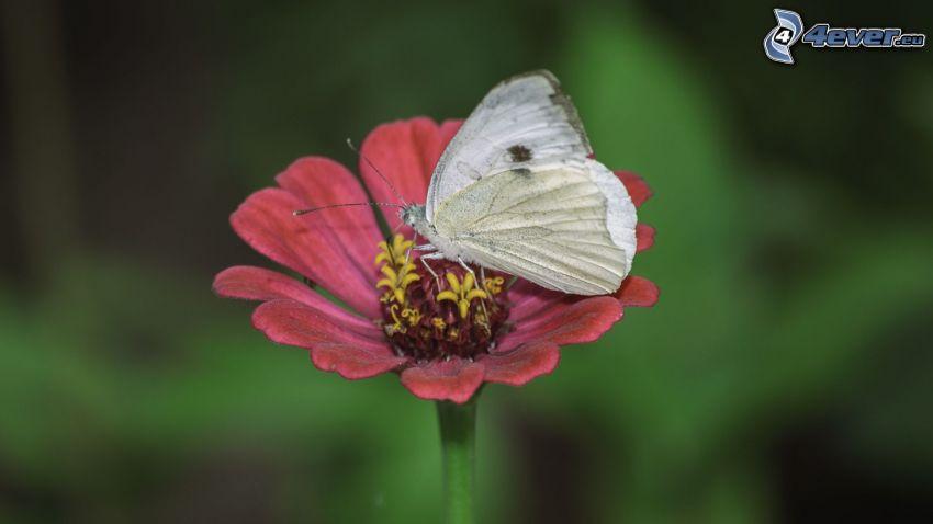 papillon sur fleur