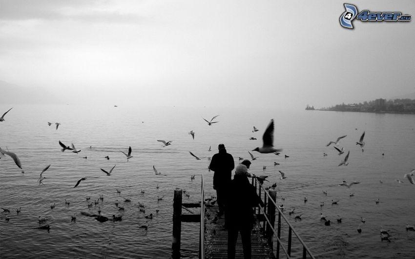 mouettes, lac, jetée en bois, gens, noir et blanc
