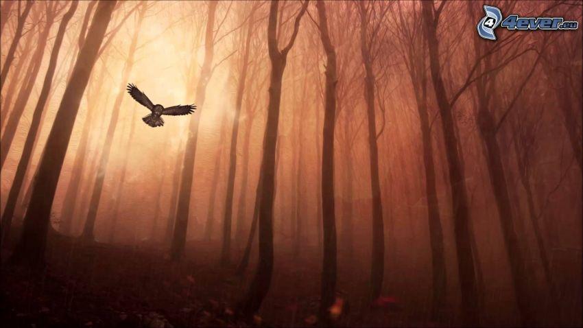 chouette, vol, forêt