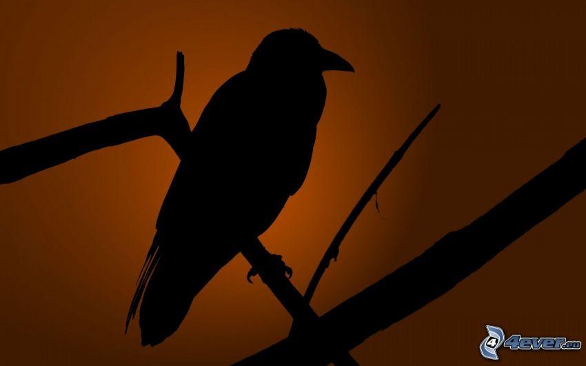 le corbeau, silhouette de l'oiseau