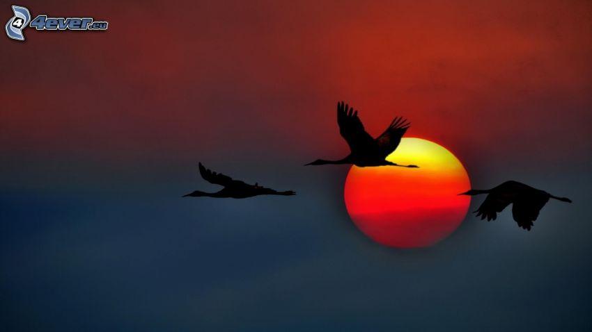 oies, silhouettes, vol, soleil
