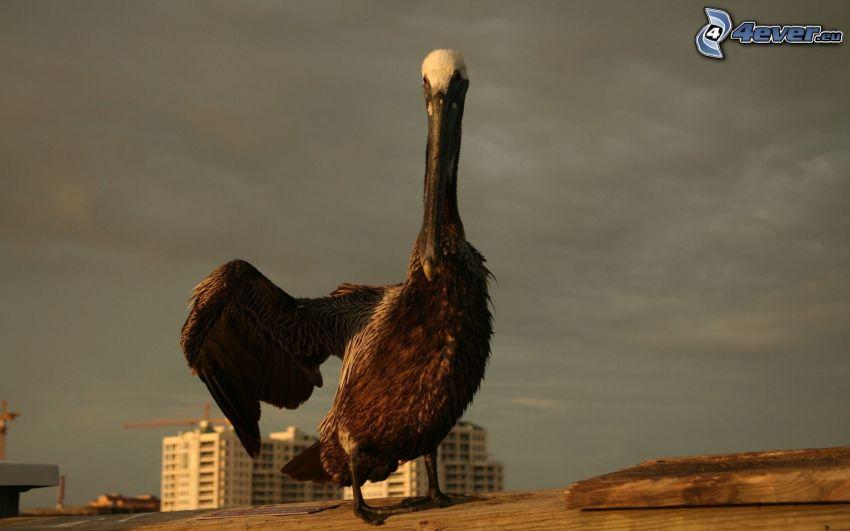 oiseau, aile