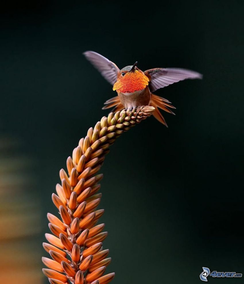 oiseau, fleur