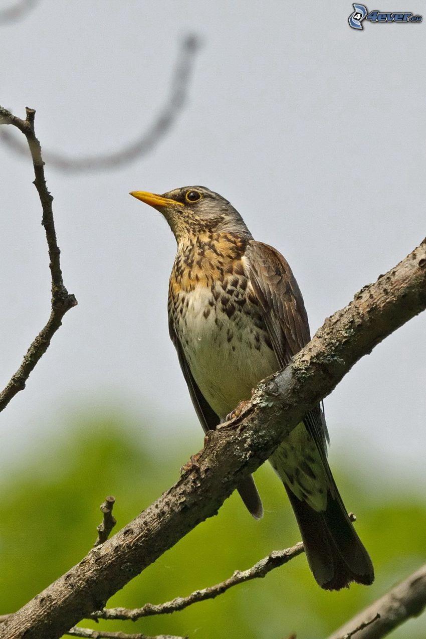 oiseau sur une branche