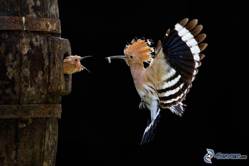 oiseaux, jeune, nourriture