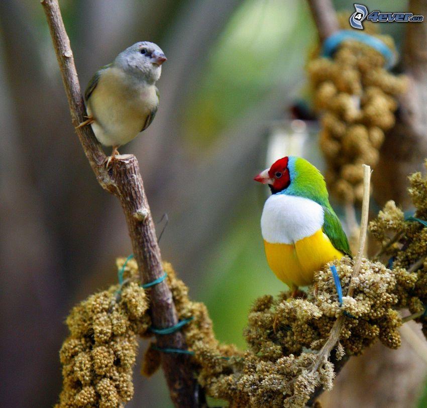 oiseaux, plante