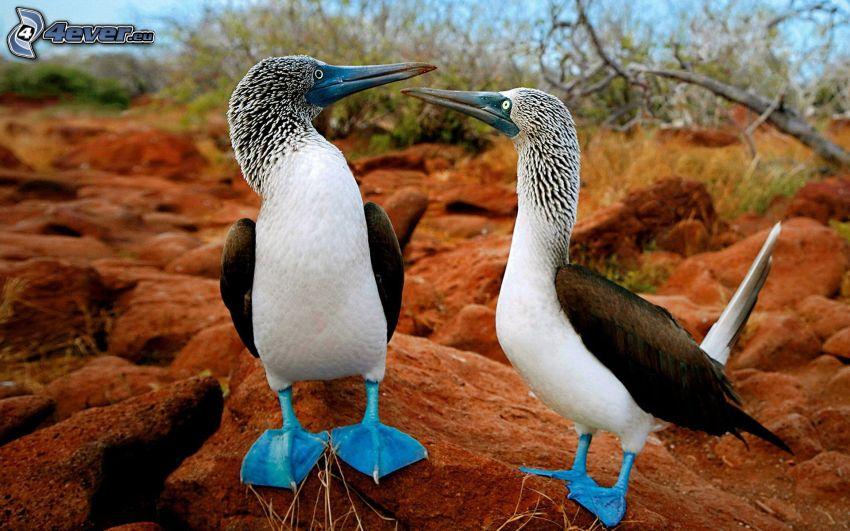 oiseaux, rochers