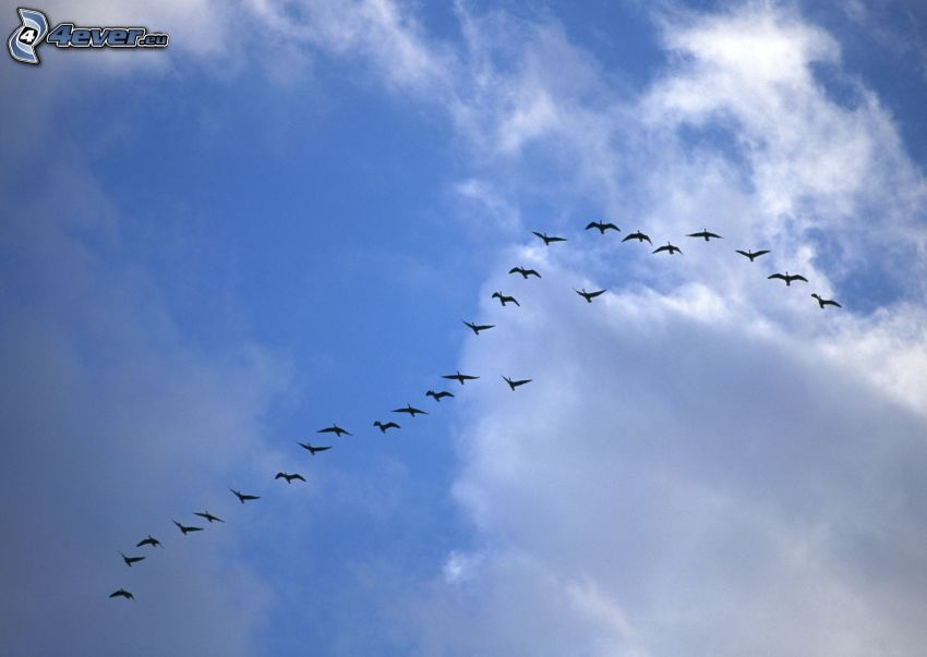 oiseaux, silhouettes