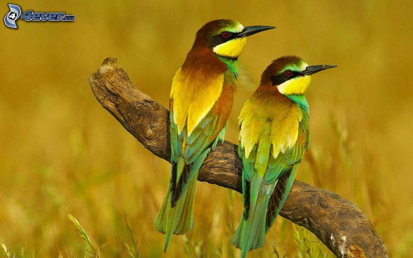 oiseaux, tronc