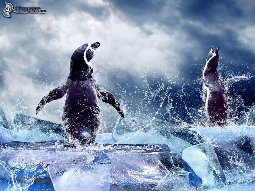 pingouins, bloc de glace, eau