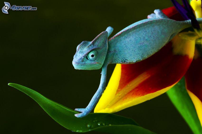 caméléon, fleur