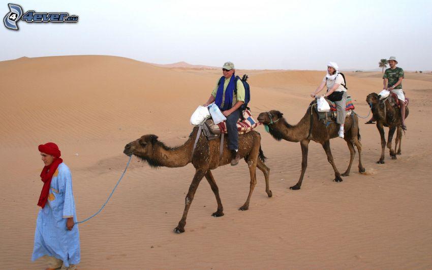 chameaux, gens, désert