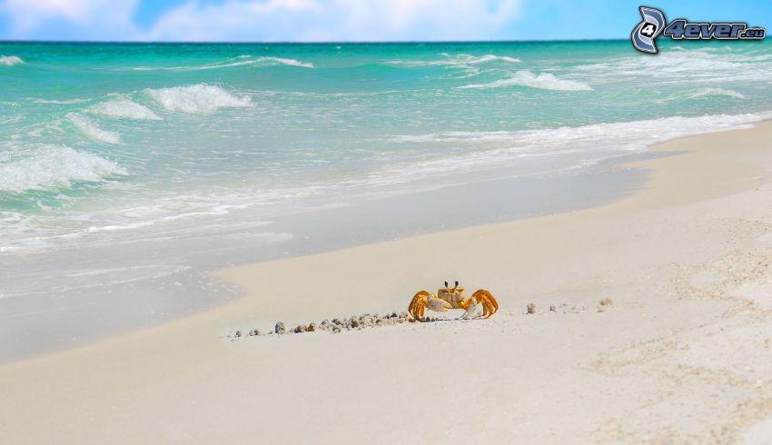 crabe sur la plage, plage de sable, mer