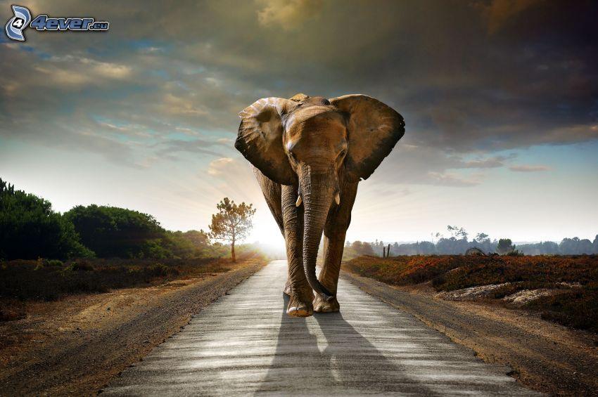 éléphant, ciel, route, HDR