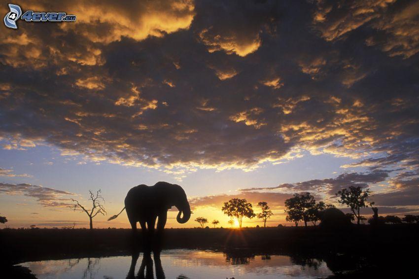 éléphant, coucher du soleil, nuages sombres, lac