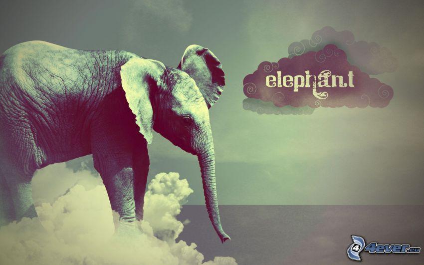 éléphant, nuages