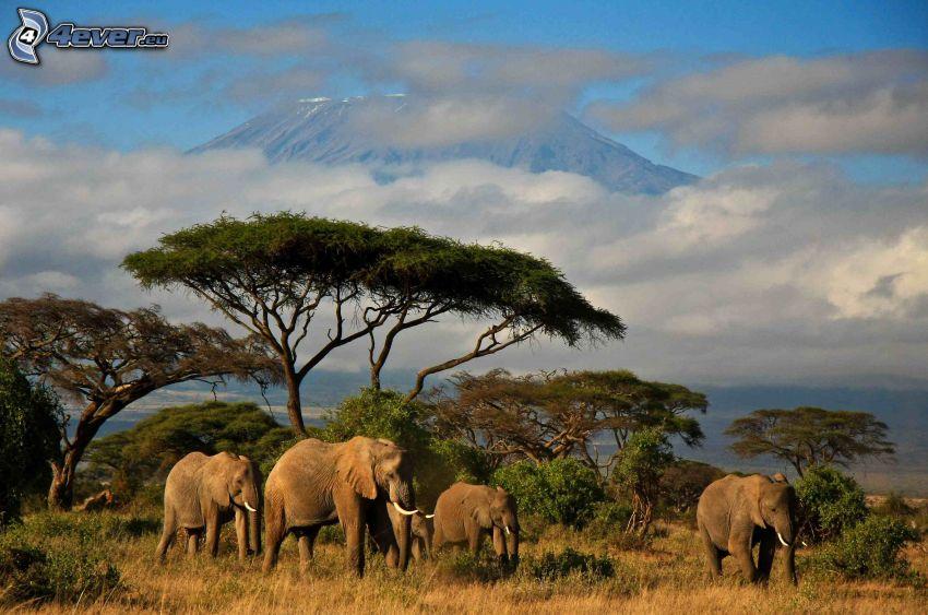 éléphants, savane, nuages, montagne