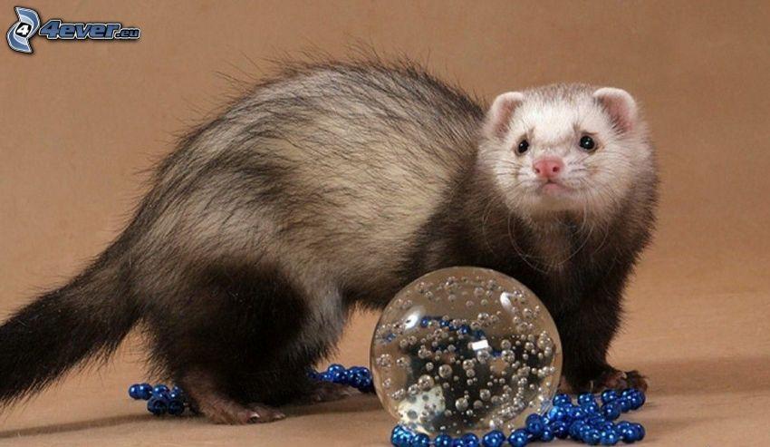 furet, balle, perles