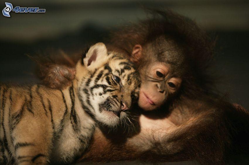 jeunes, tigre, singe