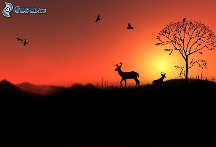 le cerf, silhouettes, silhouette de l'arbre, coucher du soleil orange