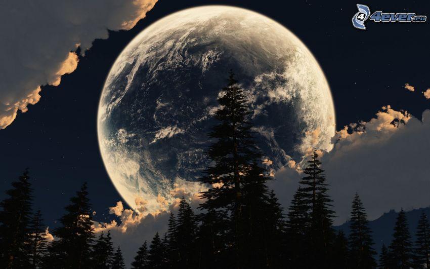 lune, silhouettes d'arbres, nuages