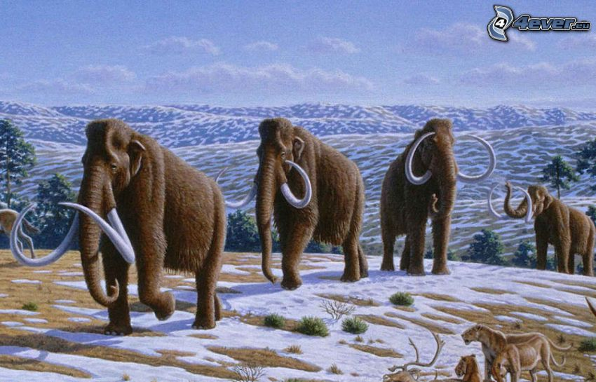mammoths, montagne